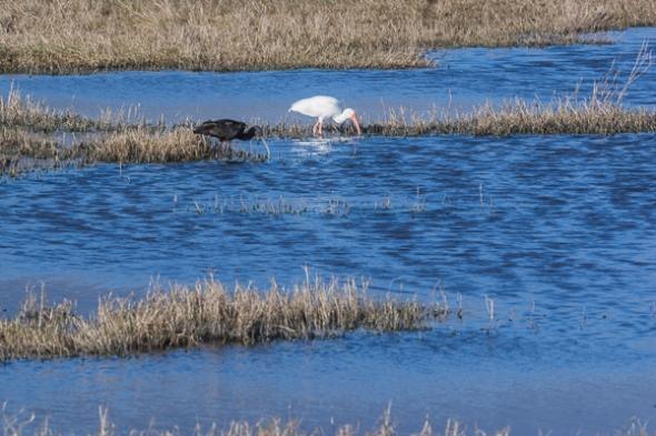 Brazoria National Wildlife Refuge