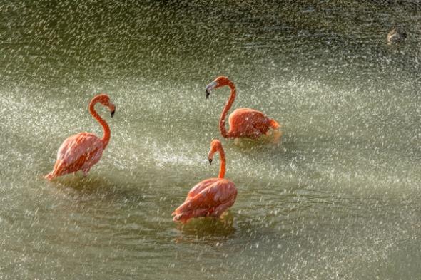 Flamingo Welcome Committee