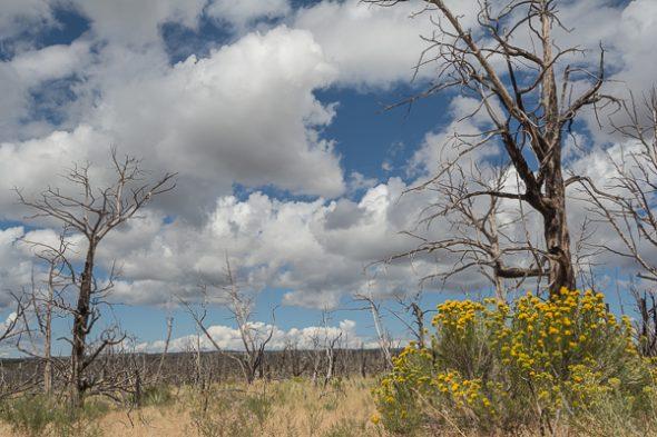 Across a wildfire ravaged plain