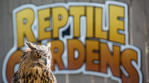 Reptile Gardens and Owl