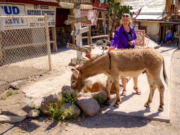 Sunny in Oatman with a wild burro