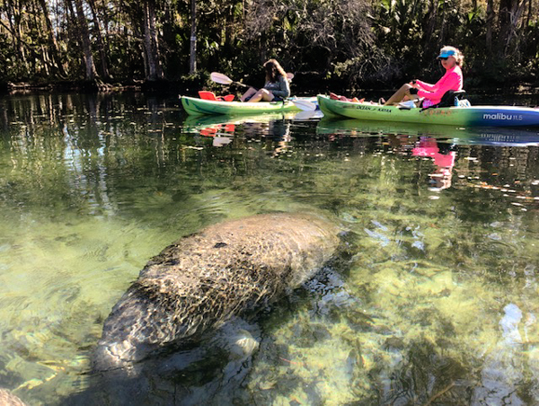 Sherry takes this photo of Kim and I paddling on the Chassahowitzka.  Thanks, Sherry!