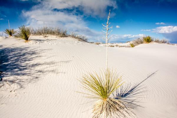 A White Sands Landscape view