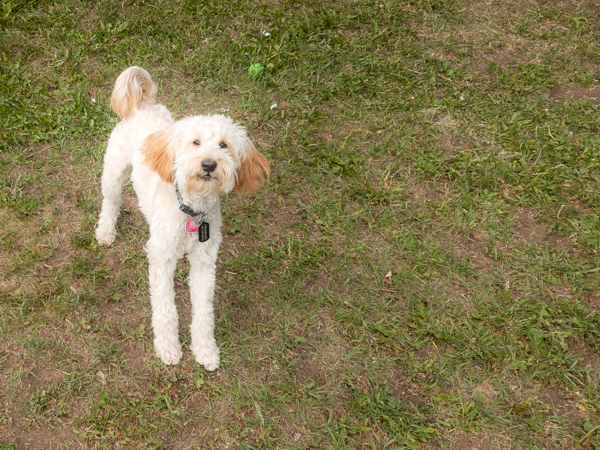 This playful pup is NOT named Franklin!  No matter how often people yelled that name at him in the RV park this weekend, he steadfastly ignored them choosing instead to frolic with great abandon!