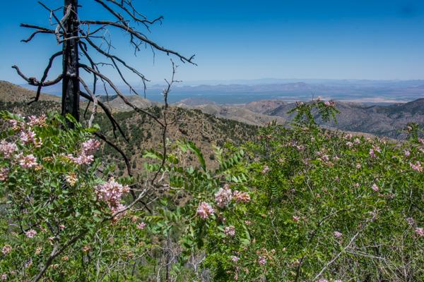Blooming Overlook