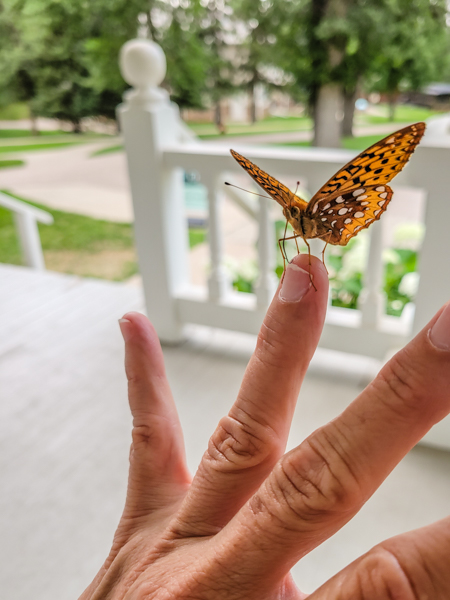 This friendly butterfly took a stroll with me and stayed right on my finger.