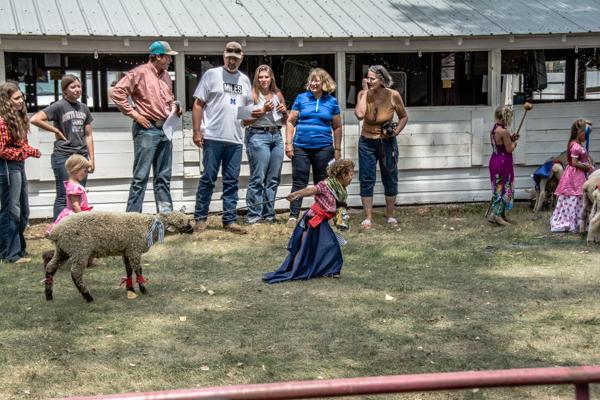 Stubborn Lamb vs. Stubborn LIttle Girl